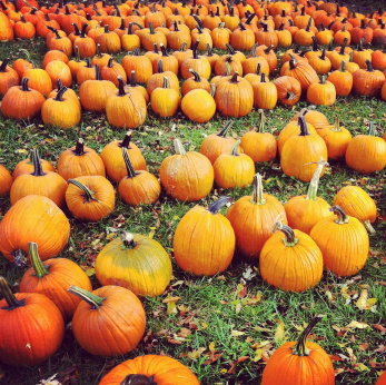 Organic pumpkins for autumn