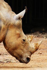 Sumatran rhino iStock_000017842068XSmall