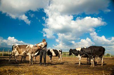 Farmer hugging dairy cow