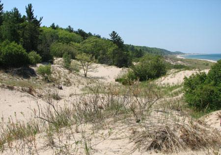 Nordhouse-Dunes
