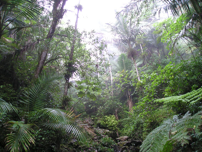 El-Yunque-rainforest