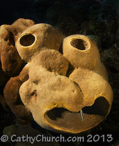 Brownsponge © CathyChurch.com 2012, ALL rights reserved