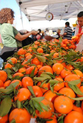 Oranges farmers market