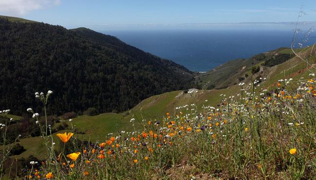 Monterey-County-landscape