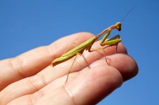 Silly Names of Creepy Crawlies - The Green Life