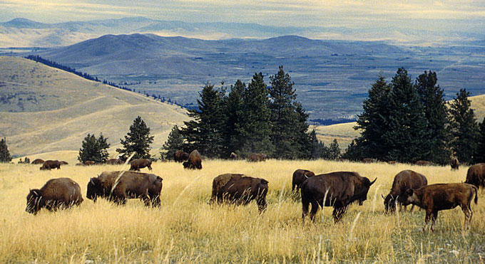 National-Bison-Range-in-MT
