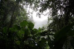 cloud forest at Monteverde