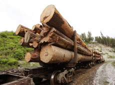 Illegal-logging