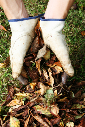 Gathering leaves for compost