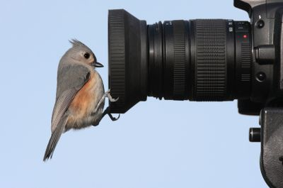 Small bird pirched on camera lens