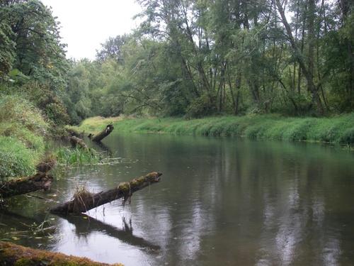 OR Chub river
