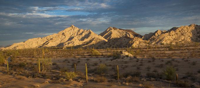 Sonoran-Desert-borderlands