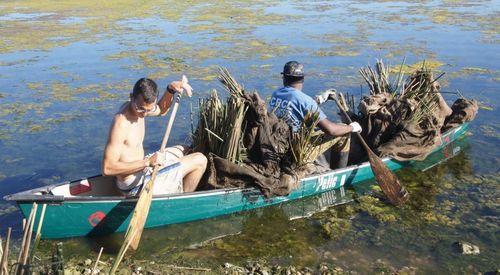 Bayou Bienvenue native plantings