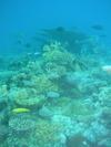Corals_lagebik
