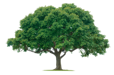 Tree_on_white_istock_000005038383xs
