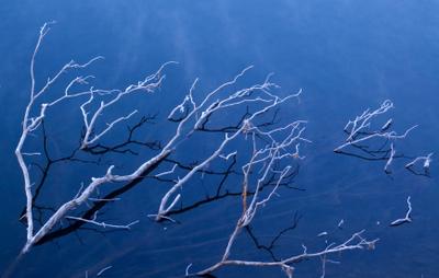 Submerged_tree_istock_000005305036x