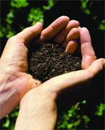 Compost_hands