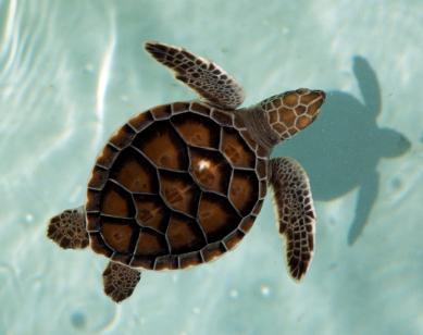 Turtle_istock_000000488035xsmall