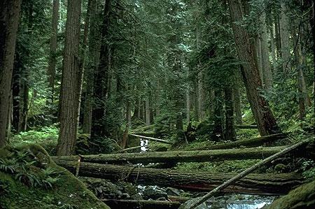 Wawildskyforest2