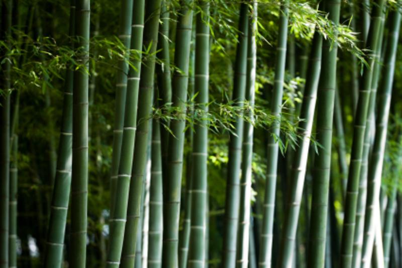 Bamboo_istock_000004908325xsmall